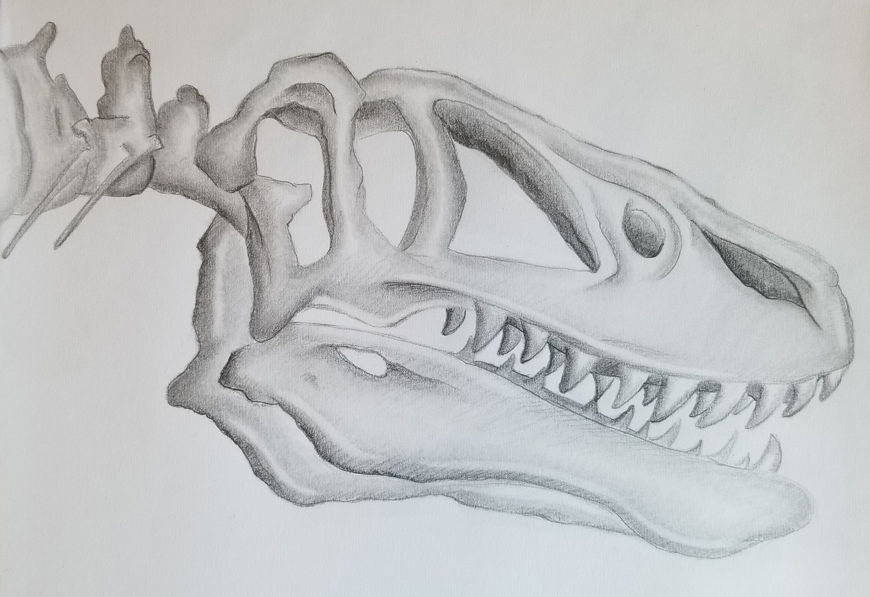 Spooky Boy T-Rex Skeleton